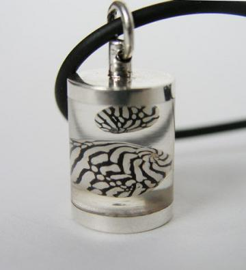 Pendant Silver & magnified Zebra shells Chamber : $32